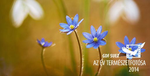 Az Év Természetfotósa pályázat 2014