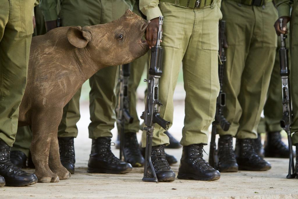 Természetvédelem kategória első helyezettje Hilary O?Leary (Zimbabve): Keskenyszájú orrszarvú a zimb