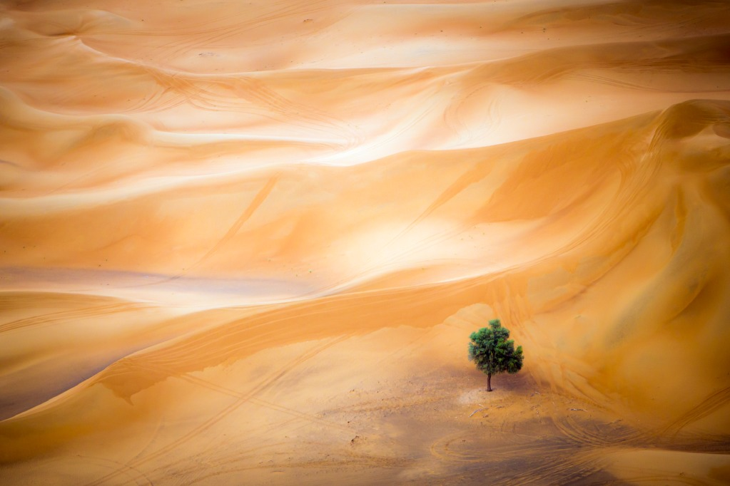 Tájkép kategória nyertese Mark Seabury: Anthel tamariszkusz a Dubai sivatagban