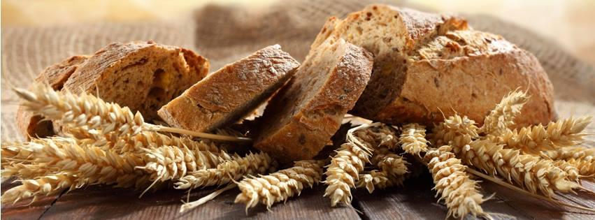 Mindennapi kenyerünk fotópályázat fényképe