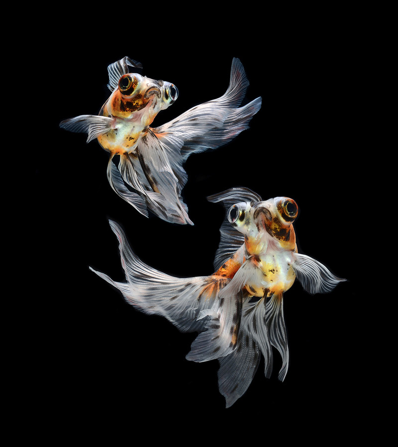 Visarute Angkatavanich hal fotók