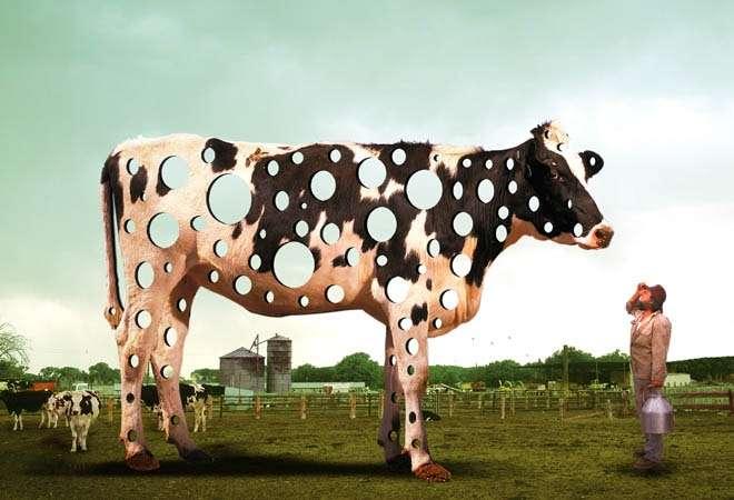 Simons Holy Cow.jpeg