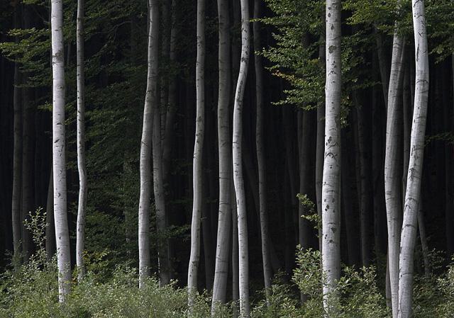 Esti erdő
