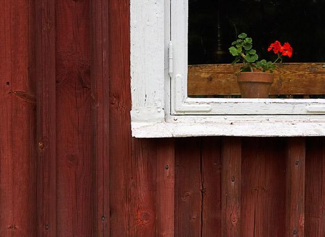 Virág az ablakban