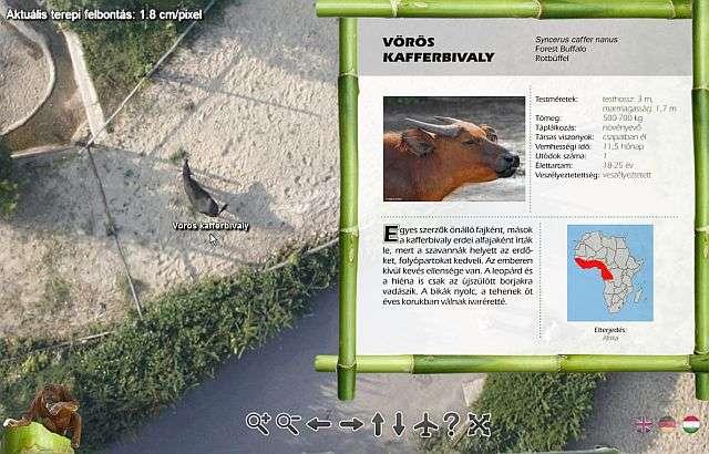 Virtuális szafari Budapesten