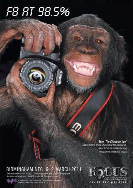 chimpanzeesuzyphoto-canon-user-focusonimaging.jpg