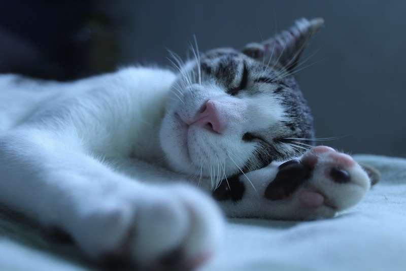 sleepingcat-photodanielguimaraesflickr.jpg