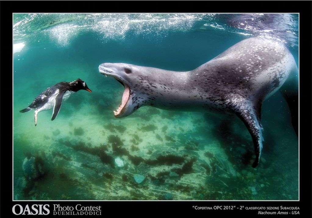 (c) Fotó: Nachorum Amos (Víz alatti világ, 2. helyezett)