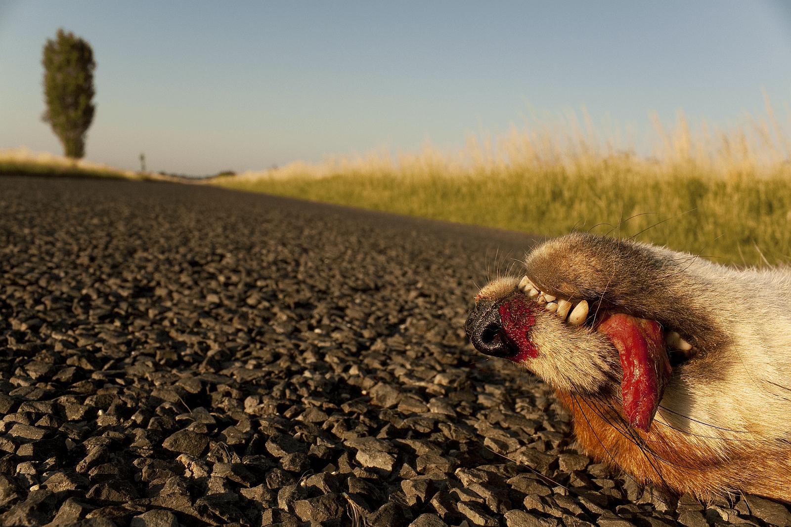 Bedő Kornél: Az út vége