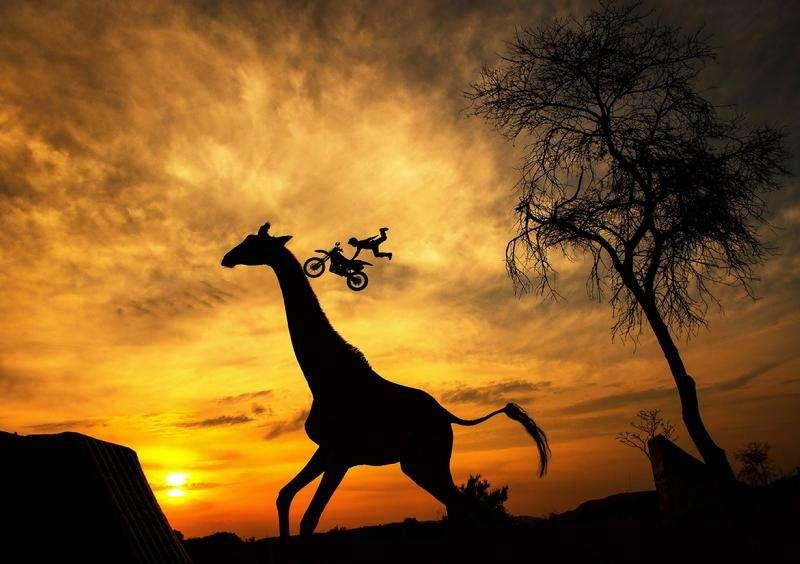 Joerg Mitter: Wild Ride