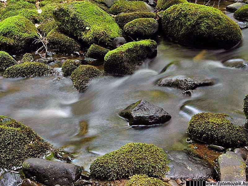 Fotográfiai expozíció: Sötét tónusú fénykép patakról
