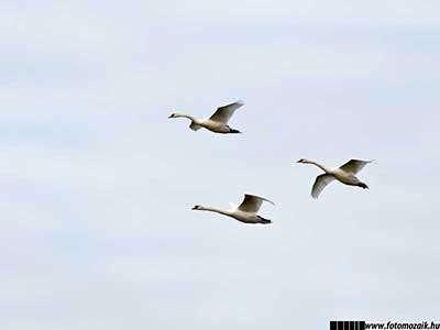 Fotográfiai expozíció: Világos tónusú fénykép madarakról