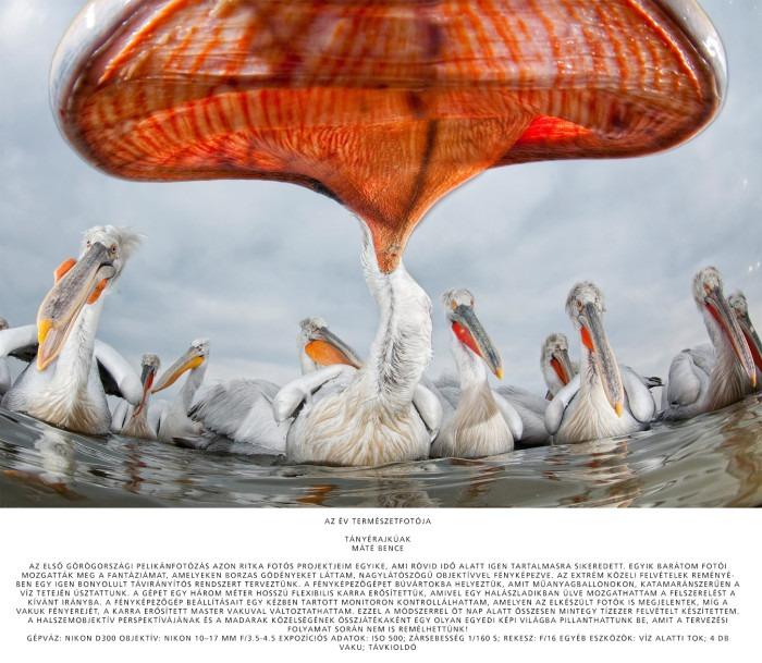 Az év Természetfotósa Mate Bence Fototvhu