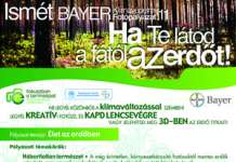 Bayer Palyazati Edm Final Small