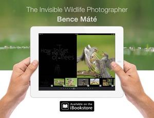 Bence Mate Promo1 Small