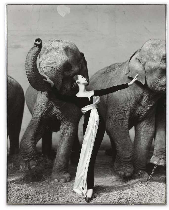 Fotó: Richard Avedon: Dovima with Elephants, Evening Dress by Dior, Cirque d'Hiver, Paris, August 1955