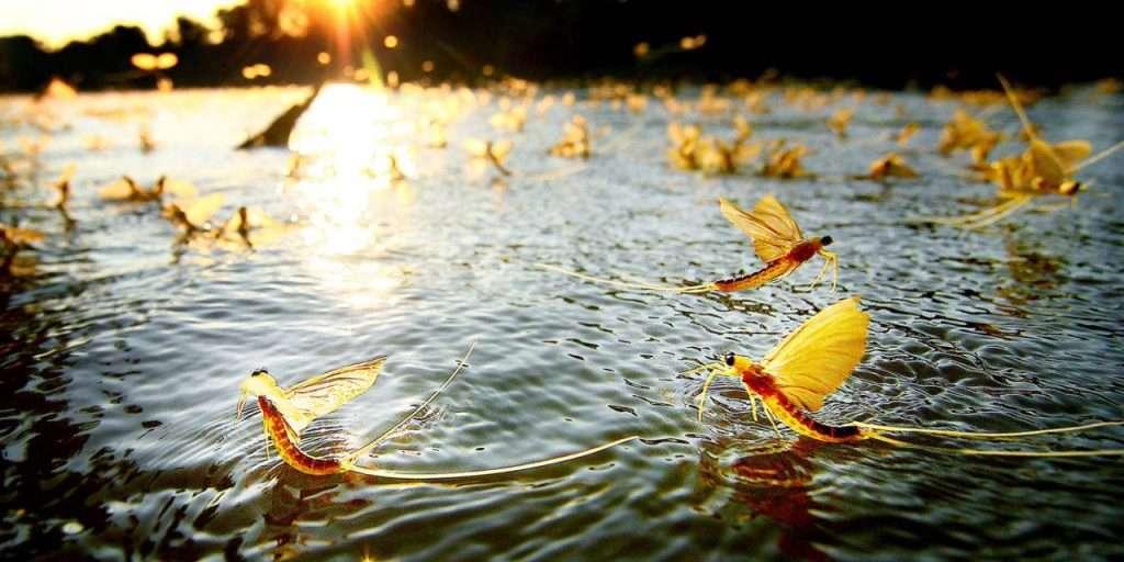 Tiszavirágzás – 4 napos kenutúra a Tisza-tó legszebb részein