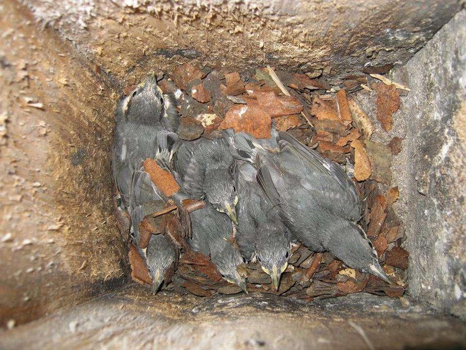 Tavaszi madárdal a Börzsönyben 1o.