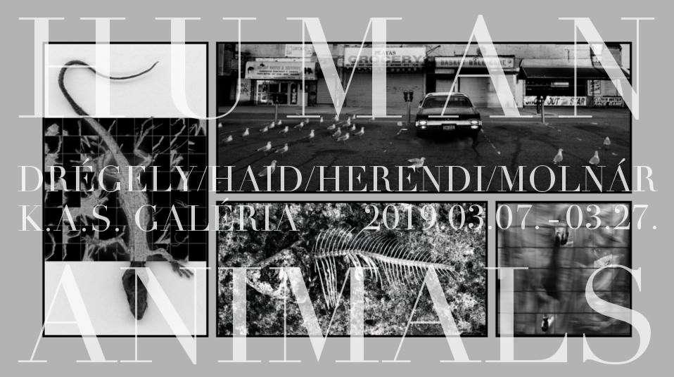 Human Animals – Drégely / Haid / Herendi / Molnár
