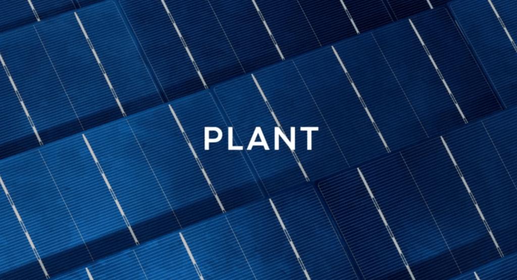 Biró Dávid: Plant