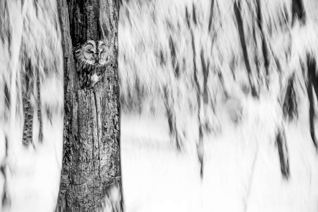 Lenergy – Az Év Természetfotósa pályázat – feltöltési időszak