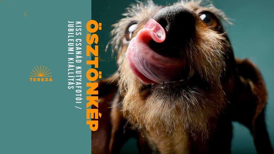 Ösztönkép – Kiss Csanád kutyafotói / Jubileumi kiállítás