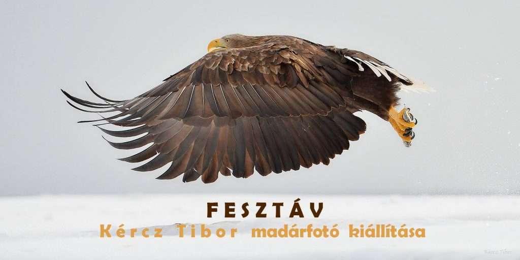 Fesztáv – Kércz Tibor természetfotós kiállítása