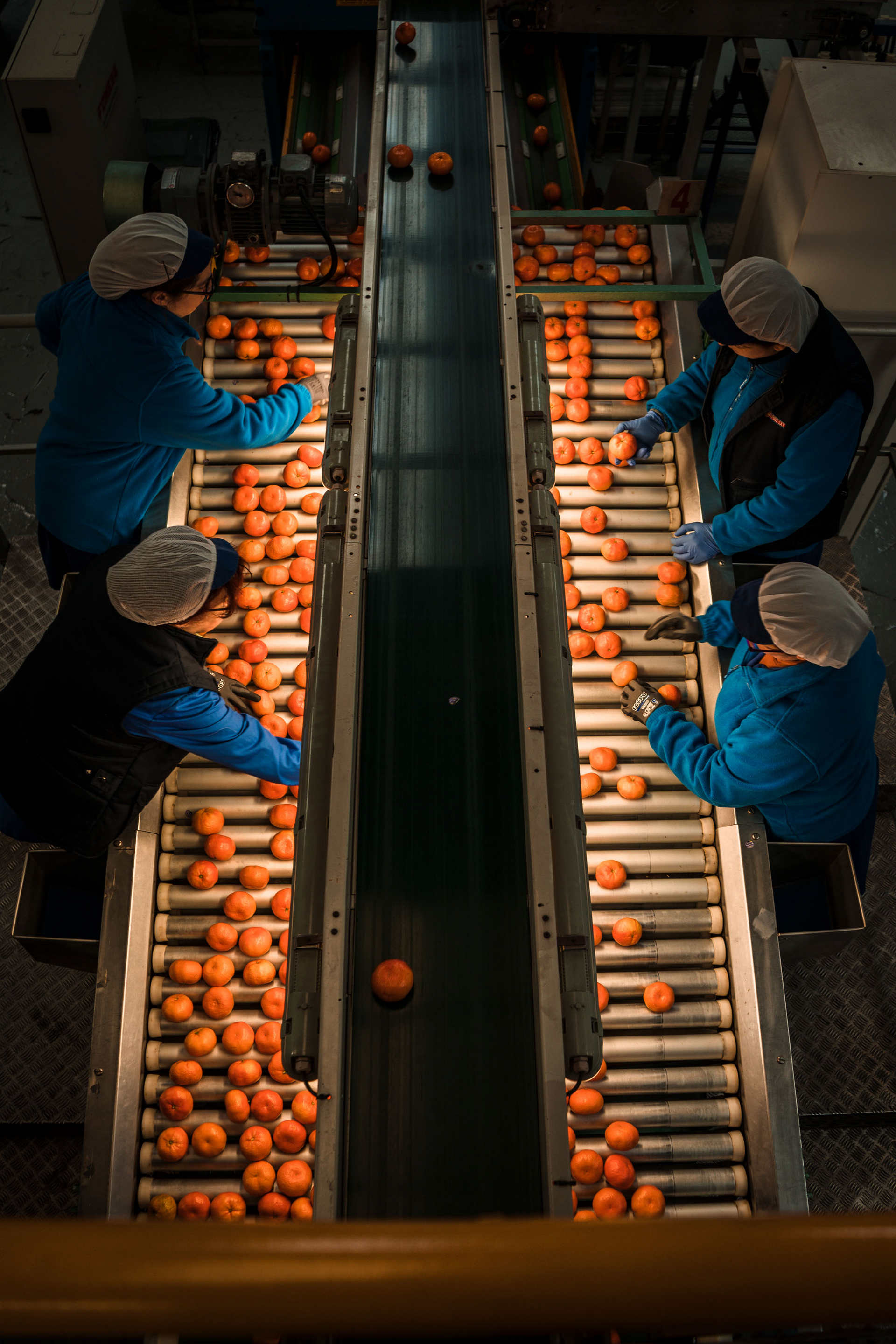 Sergi Villanueva: Four women select the oranges that are going to be exported to all of Europe.