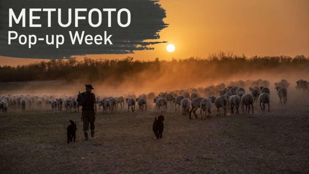 METU FOTO / Pop-up Week – Jenei Boldizsár: A juhász