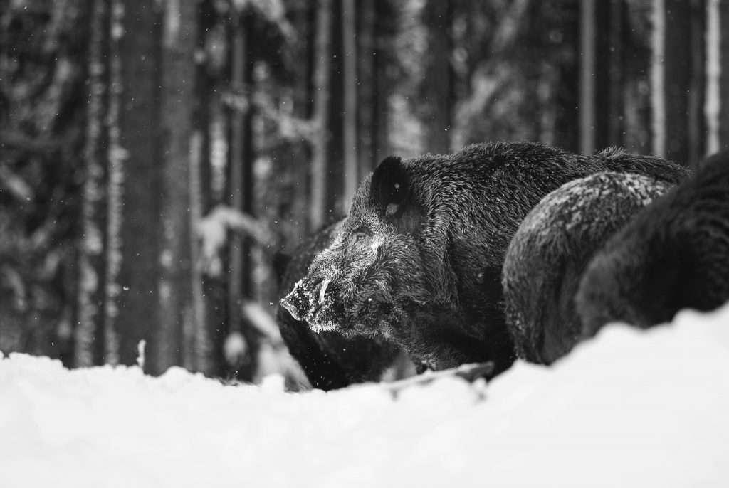 5 napos fotós tábor a Bayerischer Wald nemzeti park területén.