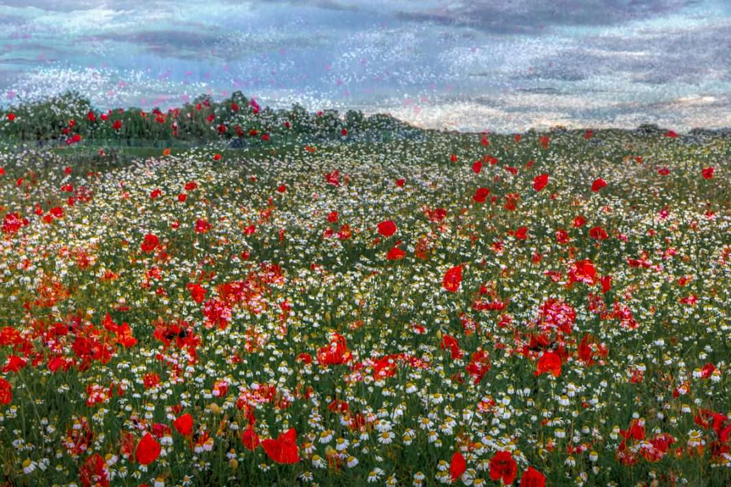 LN Layers Of Time POPPY FIELD -PIPACSTENGER
