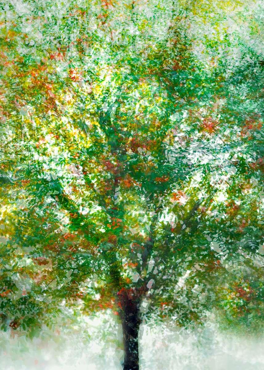 LN Layers Of Time ROWAN TREE - BERKENYEFA