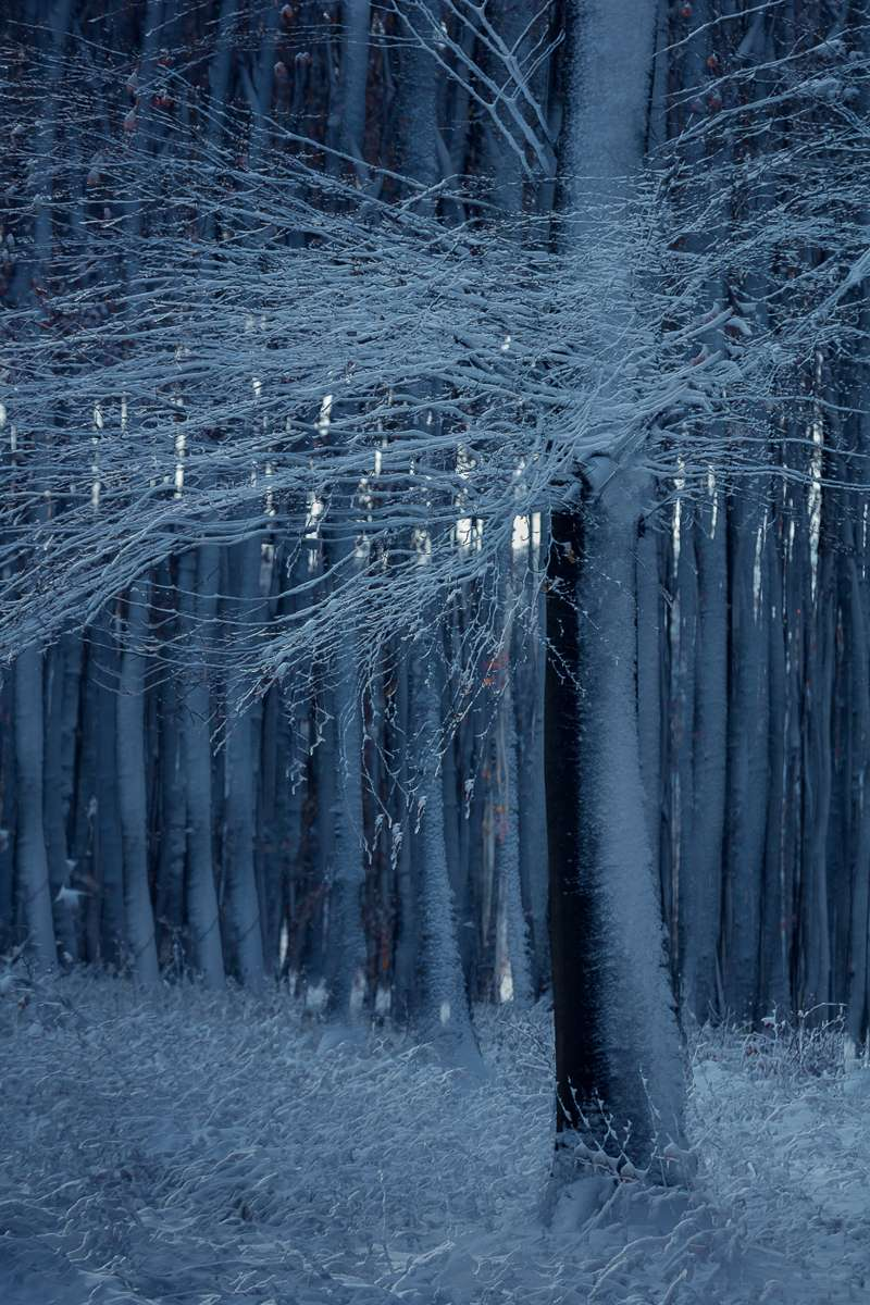 LN Layers Of Time BEECH TREE - BÜKKFA