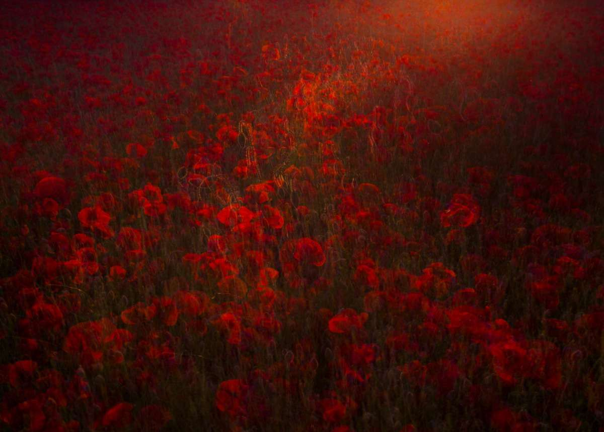LN Layers Of Time REDS OF MAY - MÁJUS