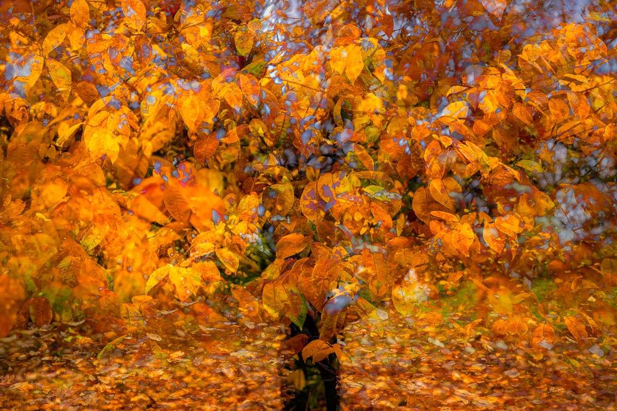 LN Layers Of Time MORELLO TREE - MEGGYFA