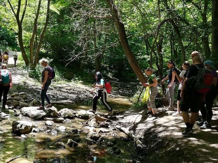 Cuha-patak és Kőhegy-szurdok: Csodavölgyek a Bakonyban