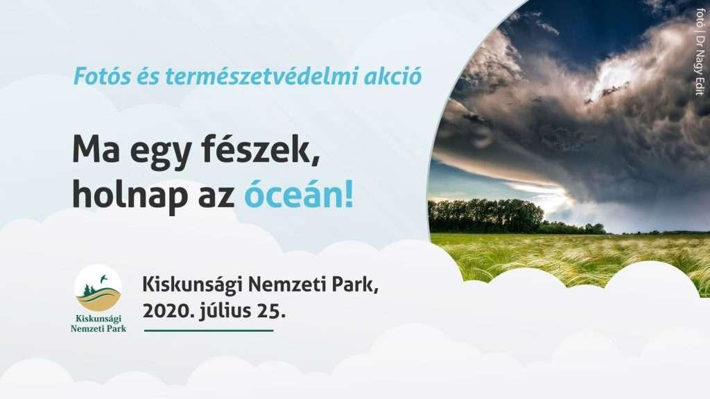Ma egy fészek, holnap az óceán! – természetvédelmi akció