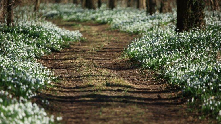 Alcsúti hóvirágünnep, látogatás a Puskás stadionban, Bicske és a Vál völgyi kisvasút