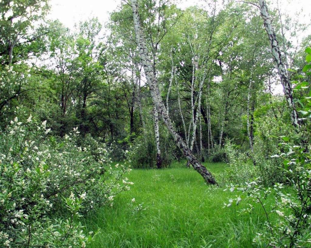 Gyöngyvirágos túra a Peszéri-erdőben