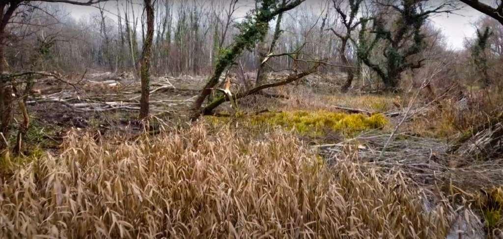Végveszélyben a Szilas-tó Természetvédelmi Terület (Forrás: Kriska György)