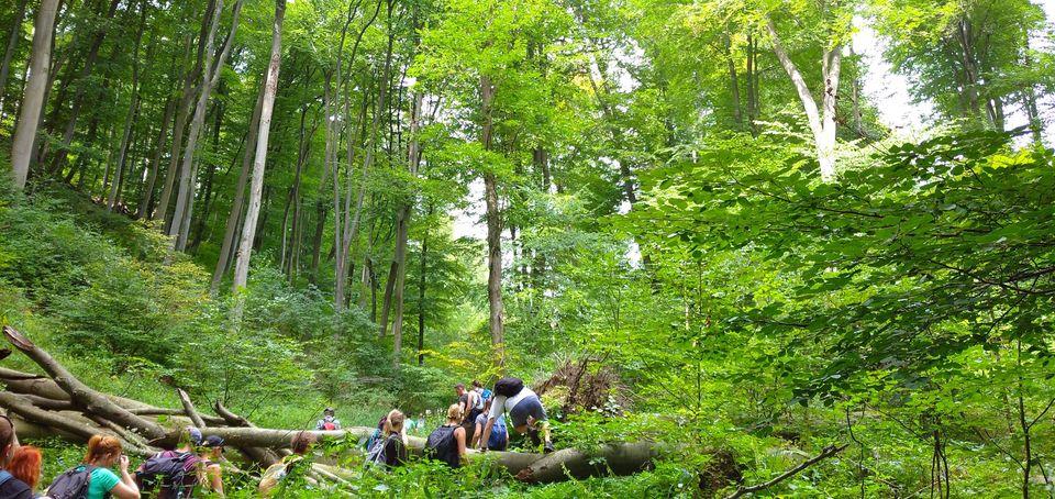 Burok-völgy túra, avagy kalandozás a magyar esőerdőben