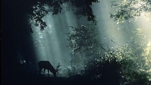 Szent Iván éji túra – az éjszakai erdő
