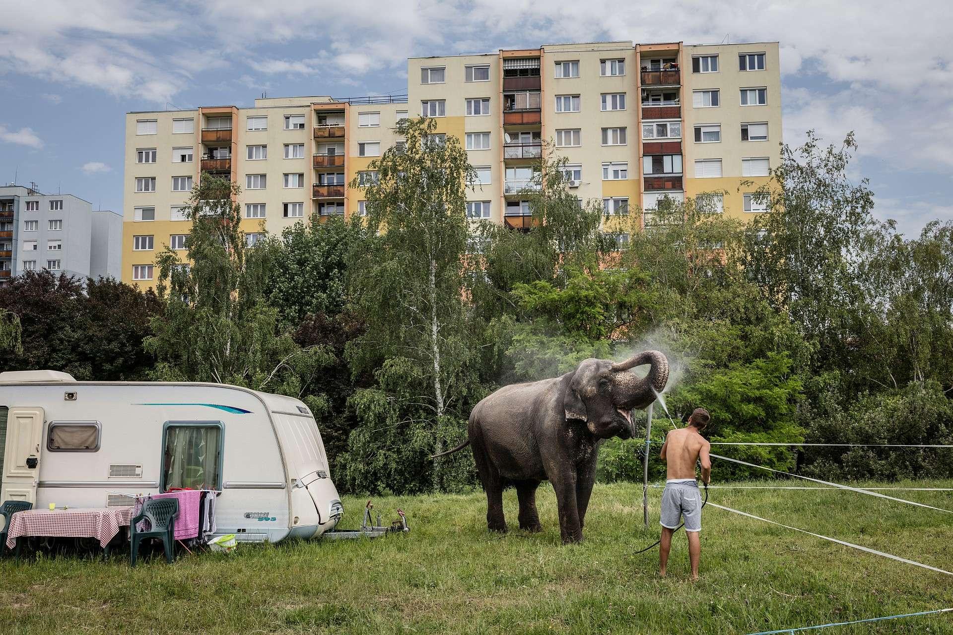 © Kállai Márton: Elefántfürdő, 2016, Budaörs