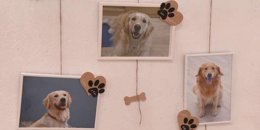 Vénkerti kutyák címmel nyílt fotókiállítás a Borsos-villában