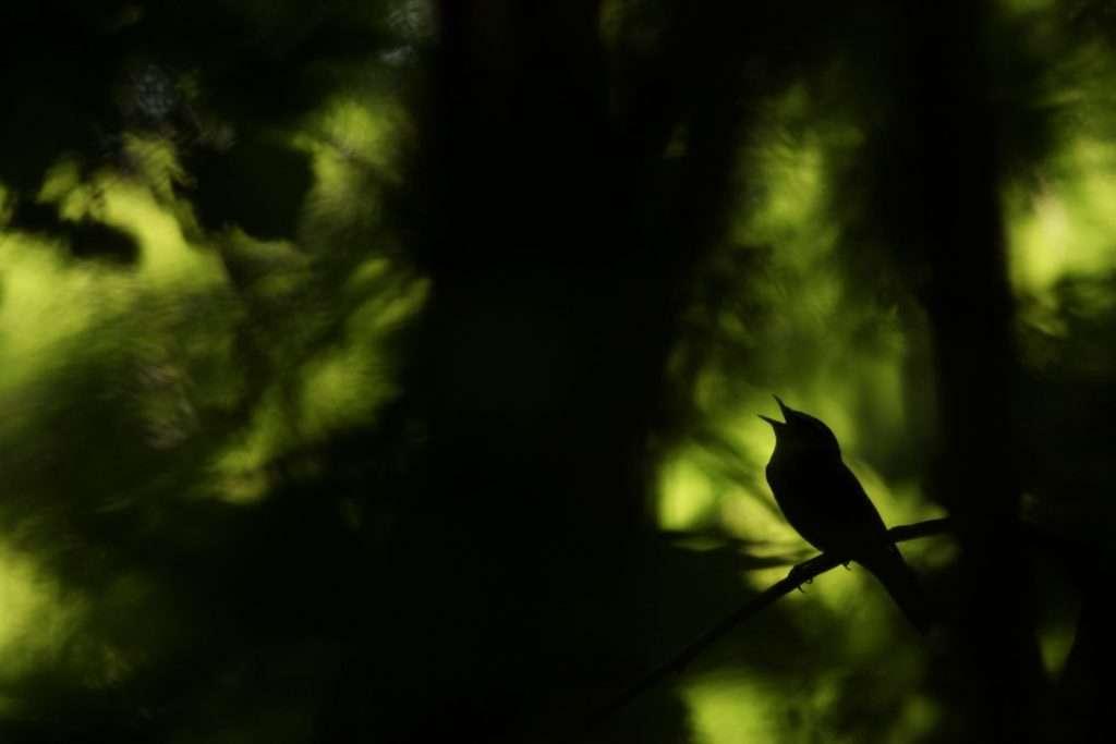2022 International Wildbird Photo Competition