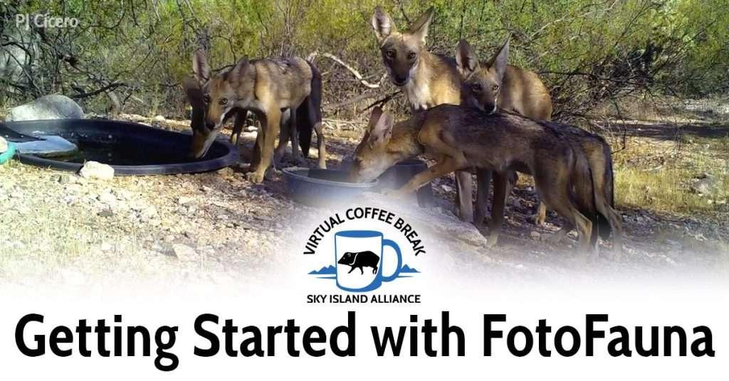 Coffee Break: Introduction to Sky Island FotoFauna