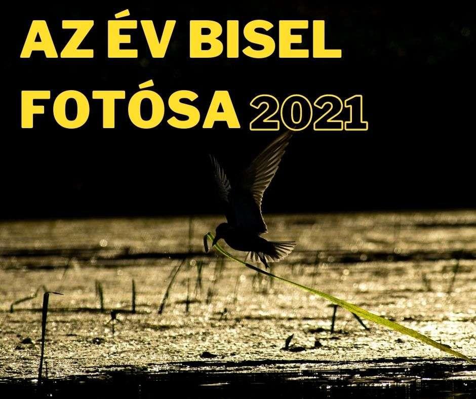 Az év BISEL fotósa – kiállítás