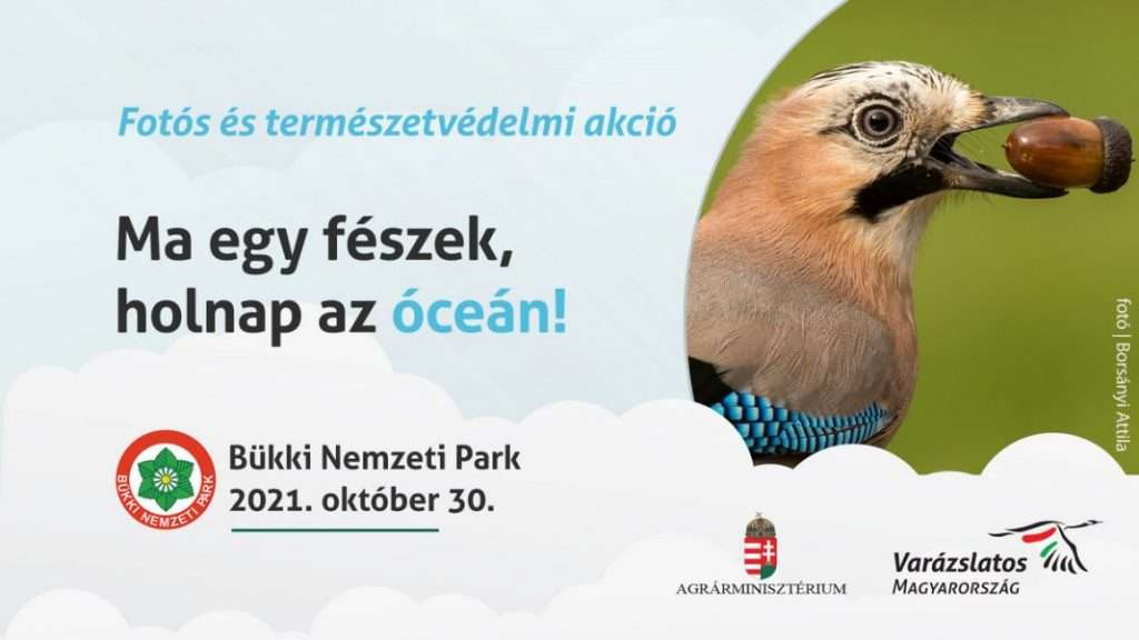 """""""Ma egy fészek, holnap az óceán!"""" természetvédelmi program a Bükkben"""