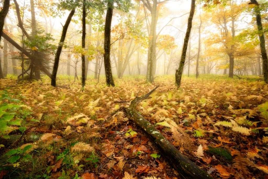 Autumn Landscapes – Photo contest