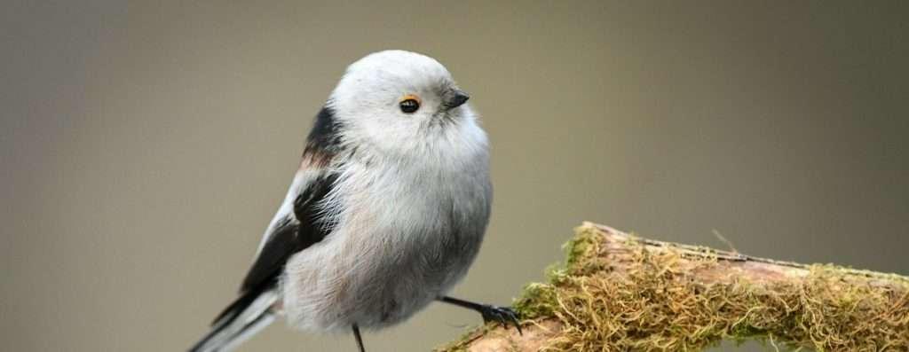 Small birds – Photo contest